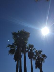 Palm-trees-Venice